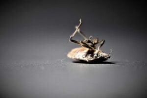 extermination de punaise de lit
